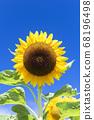 [Summer image] Sunflower in full bloom against the blue sky 68196498