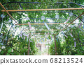 Wind chimes and green tunnel (Obusa Kannon, Nara) 68213524