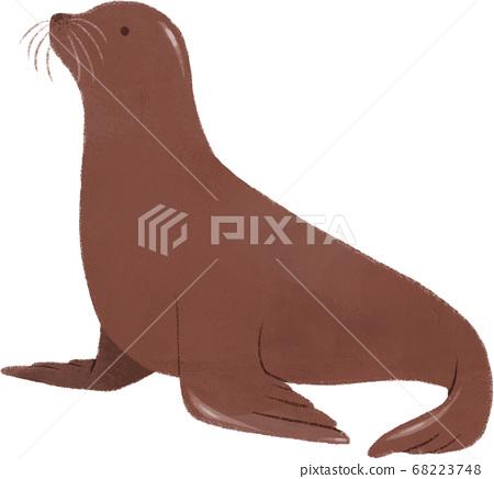 Sea lion 68223748