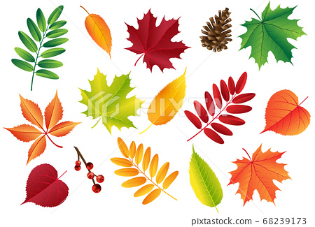 Autumn vector set with leaves, cones. Forest botanical elements for decoration. Vintage fall seasonal decor. 68239173