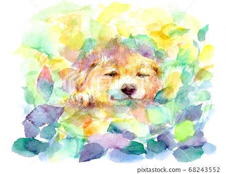 畫在水彩畫上睡午覺的狗的插圖 68243552