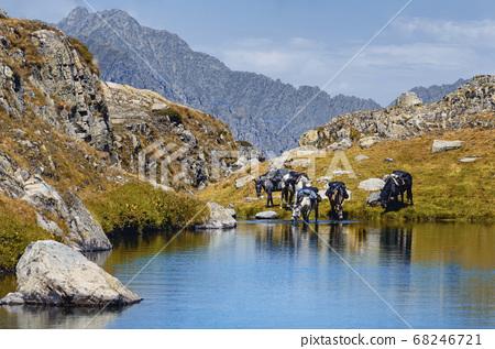 Horseback tour in the mountains 68246721