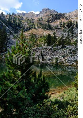 Mountain lake and larch tree 68247512