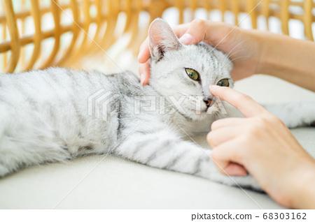 cat, kitty, playing 68303162