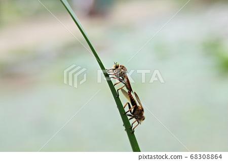 昆蟲 68308864