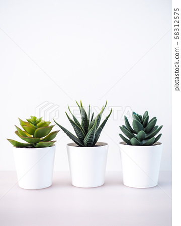 close-up of ornamental plant in pot with cactus 68312575