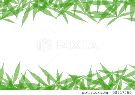 Frame formed with hemp leaves isolated on white 68317569