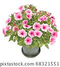 Safinia pink petunia illustration 68321551