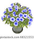 Safini blue petunia illustration 68321553