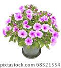 Safinia purple petunia illustration 68321554