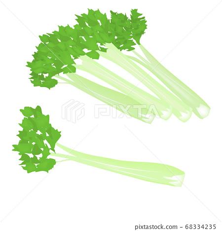 Celery (vector illustration of Yasai) 68334235
