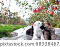 가을, 수확은 앞둔 사과 과수원, 강아지 68338467