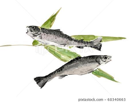 대나무와 무지개 송어 2 마리 무지개 송어 물고기 [수채화] 흰색 배경 68340663