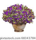 Safinia purple petunia illustration 68343784