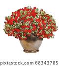 Safinia red petunia illustration 68343785
