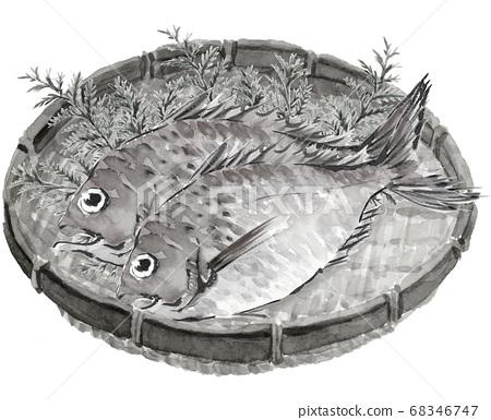 海鯛大2 Hibarusaru單調白色背景[水墨繪畫風格] 68346747