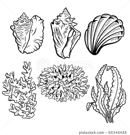 Marine life hand drawn vector illustration set. Seashells, scallops freehand drawings. Corals, reef ecosystem fauna, seaweeds, laminaria engraved outlines. 68348488