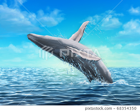 Humpback whale jumping 68354350