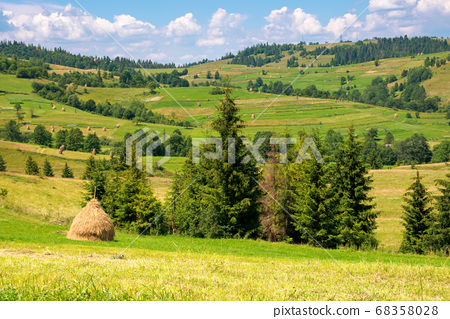 rural fields on a sunny summer day. trees on the 68358028
