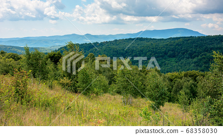 primeval beech forest in mountains. mountain 68358030