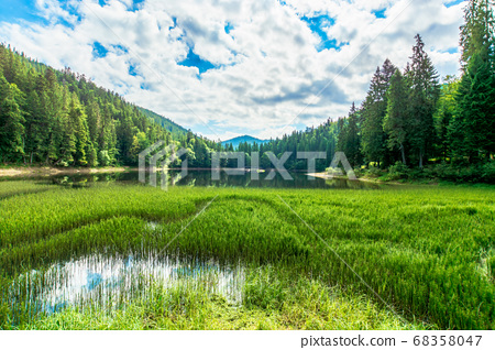 scenery around the lake in mountains. spruce 68358047