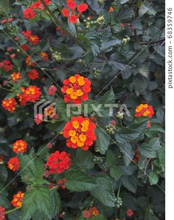 꽃 68359746