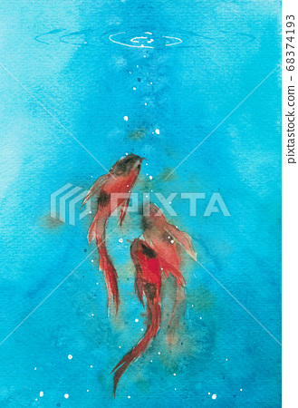 three koi carp fish in light blue water swim up to the surface. Watercolor hand painting 68374193