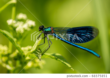 Dragonfly on grass 68375851