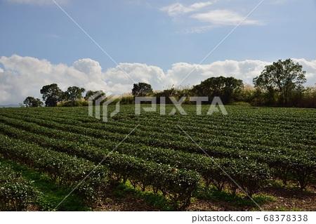 茶园景观在高山上,台湾 68378338