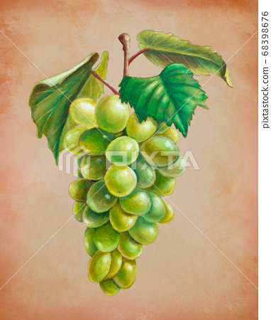 Oil pastel painting of some white grapes 68398676