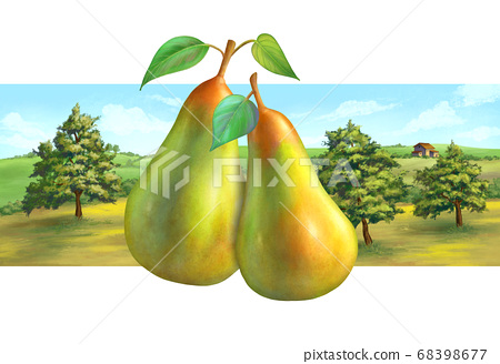 Pear orchard and rural landscape 68398677