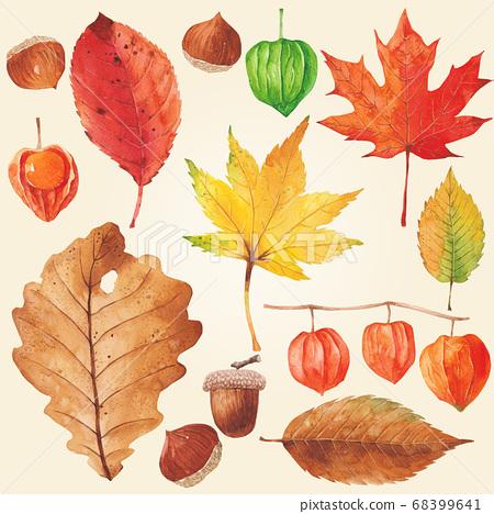 秋季植物水彩楓葉 68399641