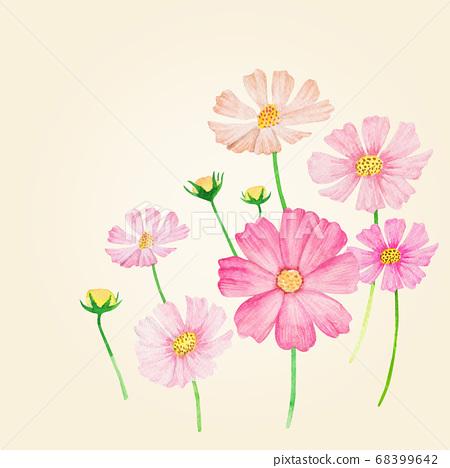 秋季植物水彩畫波斯菊 68399642