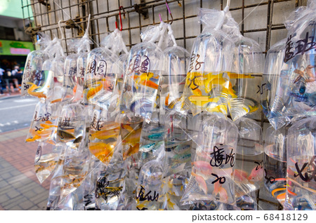 goldfish and other colorful fishes in plastic bag on pet market 68418129