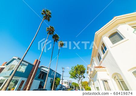 palm trees in Balboa island 68419874
