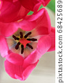 Directly above view of pink tulip flower 68425689