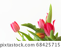 Bouquet of tulips against white background 68425715