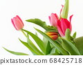 Bouquet of tulips against white background 68425718