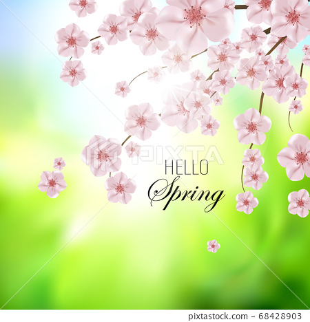 Vector background with spring cherry blossom. Sakura branch in springtime eps 10 68428903