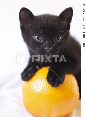 藍眼睛的黑貓小貓和橙色白色背景的小貓小貓小貓黑貓 68438418