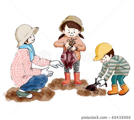 가을의 수확 고구마 캐기를하는 부모와 자식 68438988