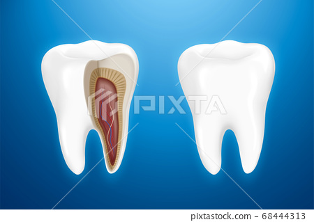 Tooth anatomy isolated on blue 68444313