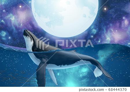 Humpback whale spy hopping 68444370