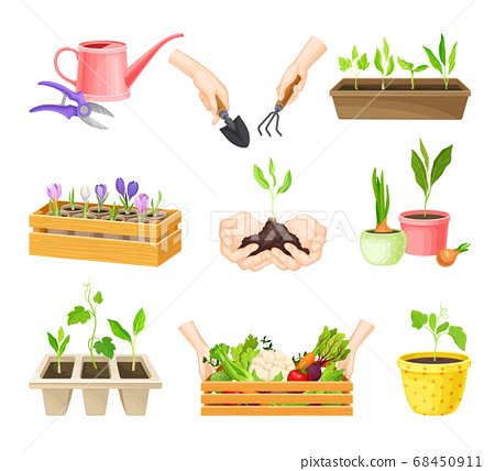 Seedling or Young Plants Growing in Plastic Pots Vector Set 68450911