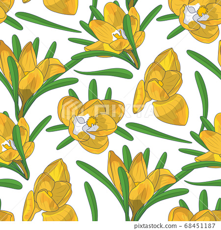 Hand drawn yellow crocus flowers seamless floral 68451187