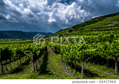 Heavy Thunderclouds Over Vineyards In Wachau Danube Valley In Austria 68457969