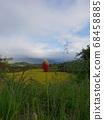 nature 68458885