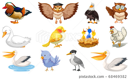 Set of different birds cartoon style isolated on 68469382
