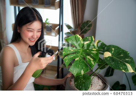 Asian lady watering to Monstera Variegated tree by 68470313