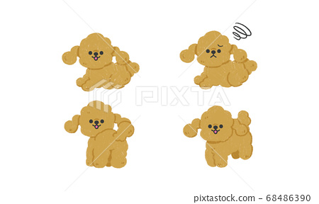 Hand drawn puppy illustration (toy poodle, facial expression variations) 68486390